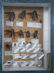ねずみ・昆虫防除・ハチ・ヤスデ駆除・ヘビ類対策の様子